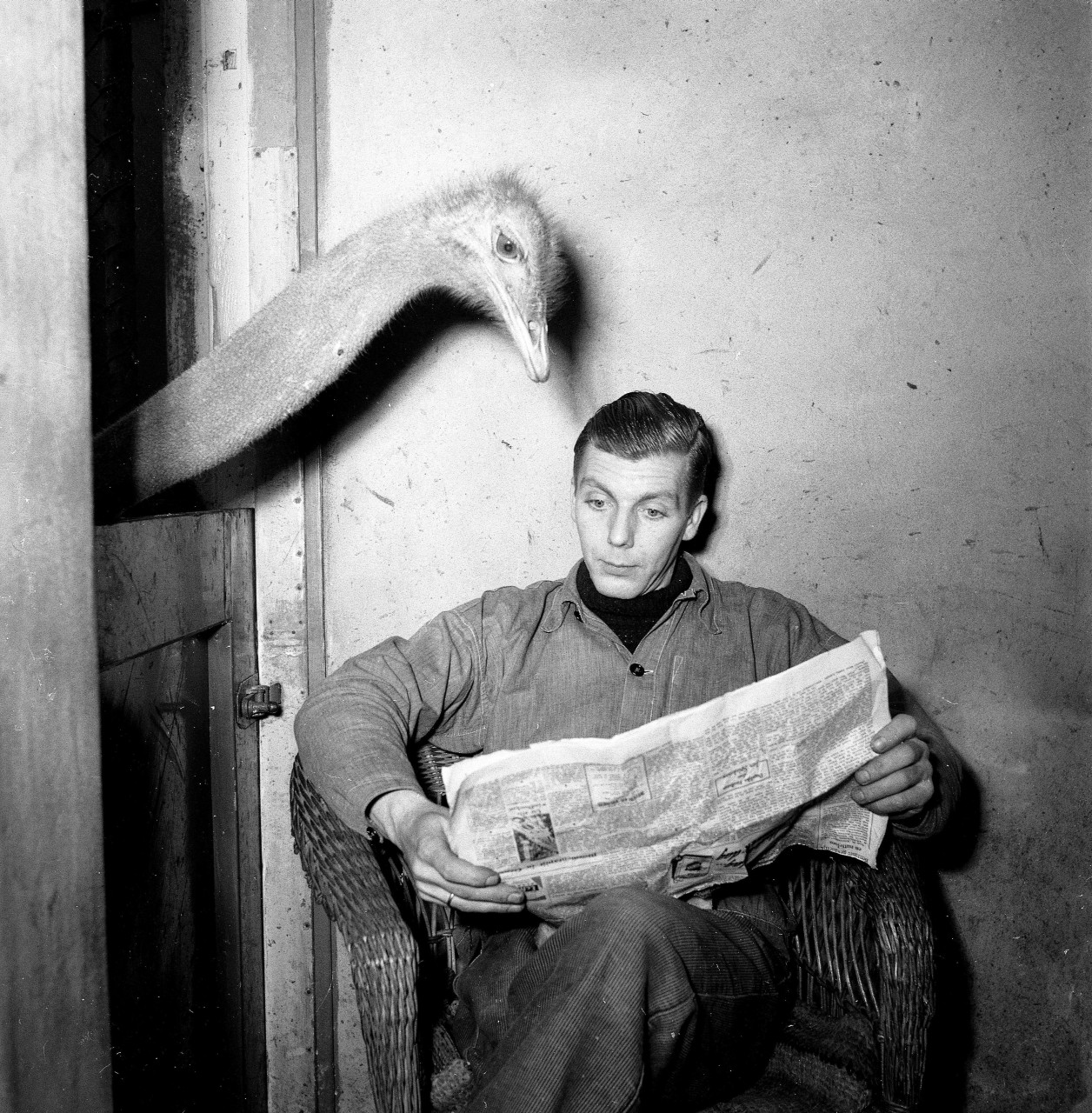 Ostrich reads newspaper of caretaker, Nationaal Archief, Wikimedia Commons